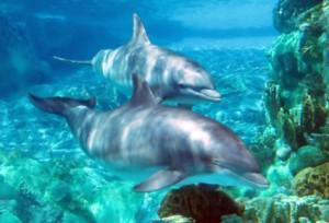 Mammalian diving