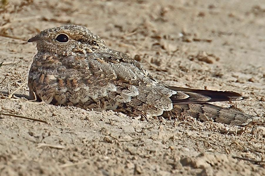 Animal Camouflage Facts  Some Interesting Facts