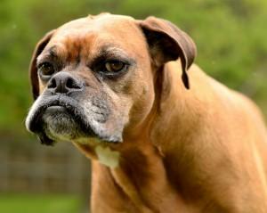 GRUMPINESS dog
