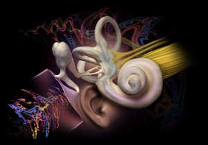 Inside The Human Ear