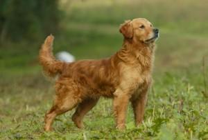 PLAYFULNESS dog