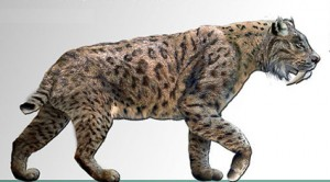 sabre-toothed cats fossil