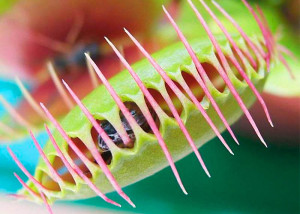 Carnivorous Plants Facts