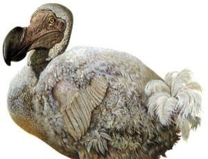 Dodo birds extinct