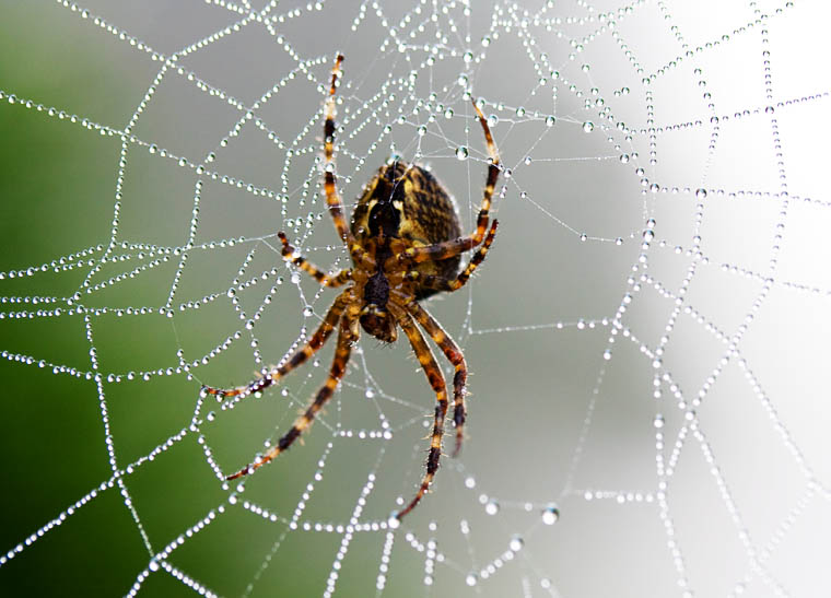 Facts about spiders some interesting facts for What does a garden spider look like
