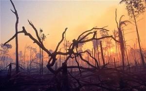 Geo-climate extinction
