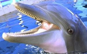 How do Marine Animals Produce Sound