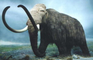 Mammoths extinct