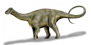 Nigersaurus dinosaur