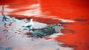 Red Tide Australia