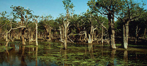 The Upper Amazon