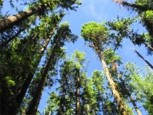 Trees Grow