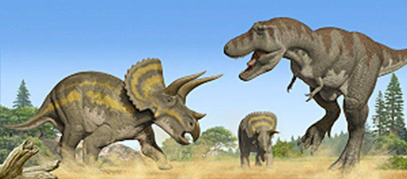 Triceratops Facts - Some Interesting Facts T Rex Vs Triceratops Fighting