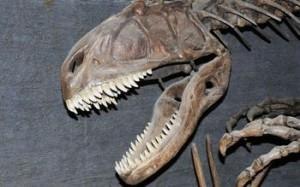 Velociraptor Facts