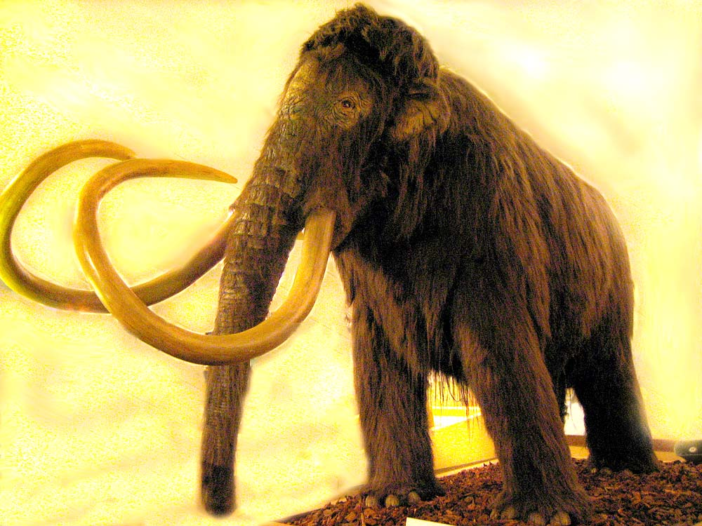 Wooly Mammoth Facts
