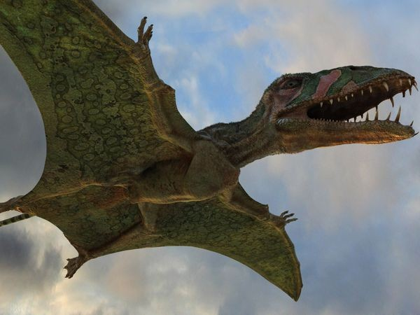 Pterosaur And Pterodac...