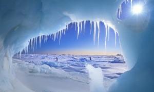 polar explorers facts