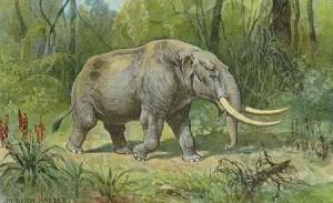 reexamined a mastodon