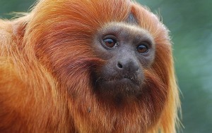 Monkey Faces Evolution