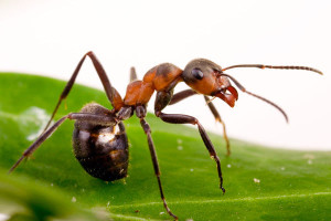 Ant Behavior Understanding