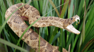 Survive A Snake Bite