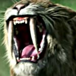 sabre toothed tiger teeth