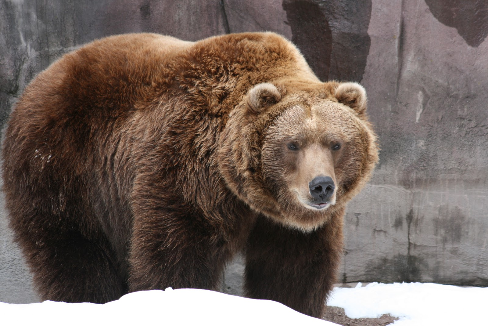 10 Facts About Grizzly Bears Some Interesting