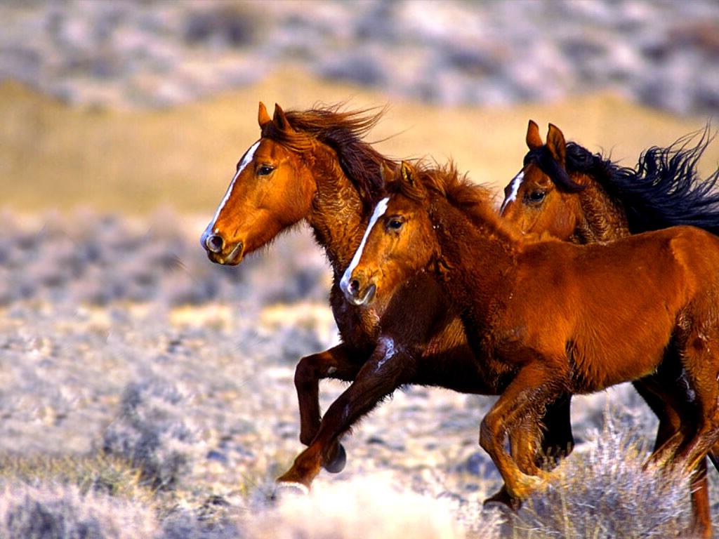 Facts About Mustang Horses - Some Interesting Facts