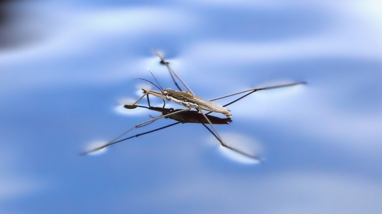 Facts About Water Striders Some Interesting Facts