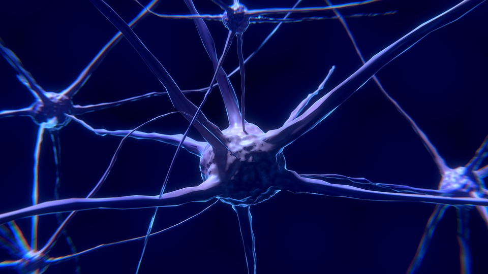 Human Nervous System Facts And Functions - Some Interesting Facts