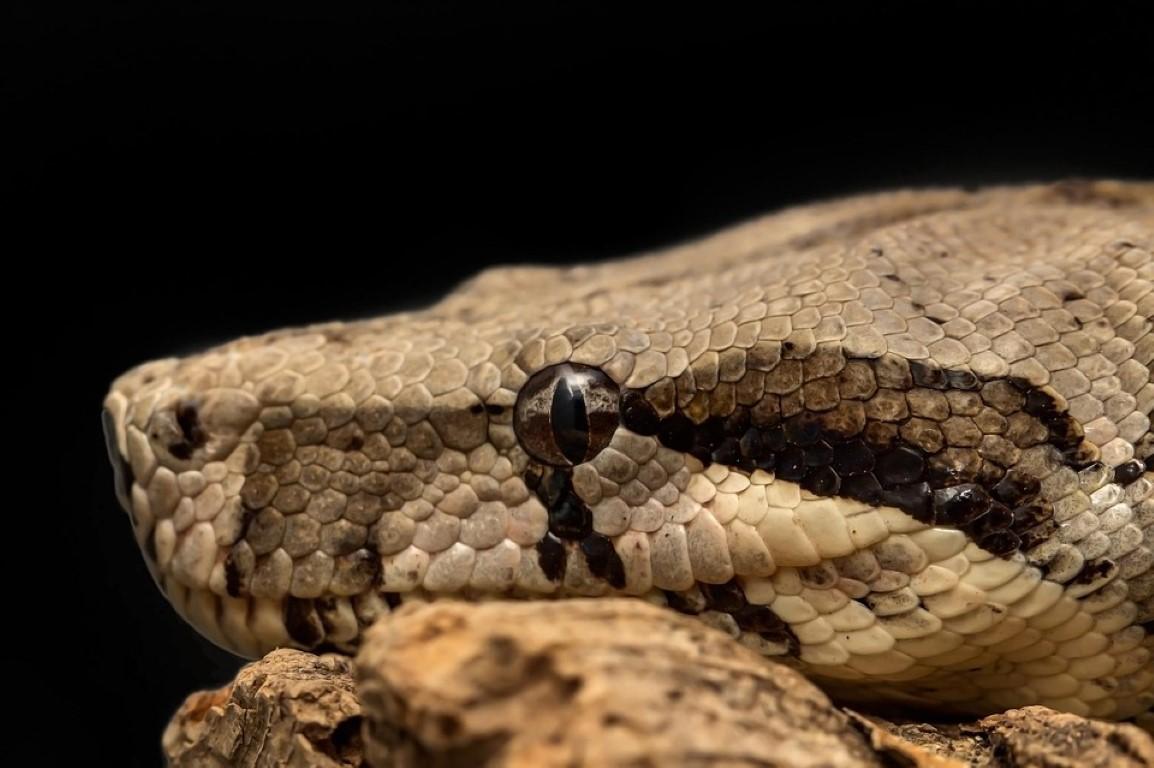 python fun
